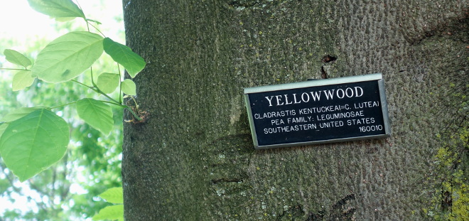 Kaleandtell - Yellowwood - Gulved i BBG